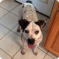 Adopt A Pet :: Katie - Blue Ridge, GA
