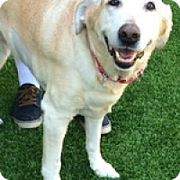 Adopt A Pet :: Maggie Dee - Torrance, CA