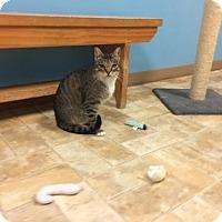 Adopt A Pet :: Clive - Monroe, LA