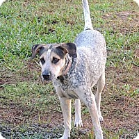 Adopt A Pet :: Sadie - Grand Island, FL