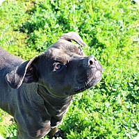 Adopt A Pet :: Margo - Yuba City, CA