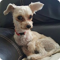 Adopt A Pet :: Chewy - Windermere, FL