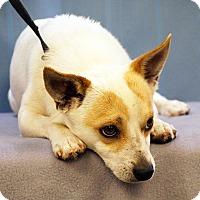 Adopt A Pet :: Scooby - Maynardville, TN
