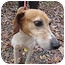 Photo 2 - Hound (Unknown Type) Mix Dog for adoption in Chesterfield, Virginia - Zoe