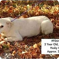 Adopt A Pet :: # 926-08 - RESCUED! - Zanesville, OH
