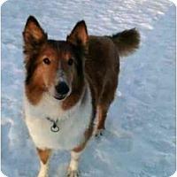 Adopt A Pet :: Nick - Indiana, IN