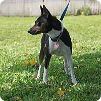Adopt A Pet :: Duke - Pompano Beach, FL