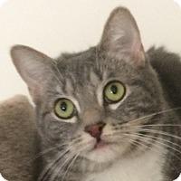 Adopt A Pet :: Thumper - Winchester, CA