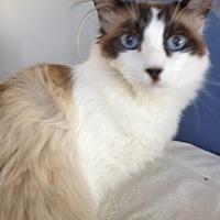 Adopt A Pet :: Bandit - Roseville, CA