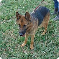 Adopt A Pet :: Cameron - Greeneville, TN