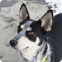 Adopt A Pet :: WILLOW-adoption pending! - Nampa, ID