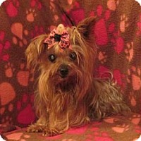 Adopt A Pet :: PRINCESS - WOODSFIELD, OH