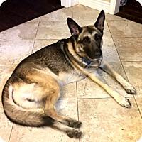 Adopt A Pet :: Jordan - Houston, TX