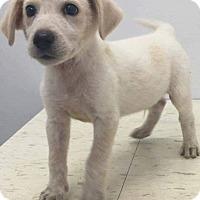 Adopt A Pet :: Garret - Patterson, NY