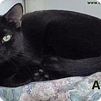 Adopt A Pet :: Ally - St Louis, MO