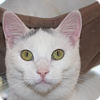 Adopt A Pet :: annabella - Santa Monica, CA