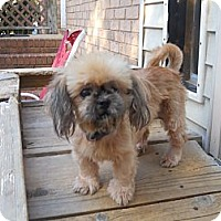Adopt A Pet :: Maggie - Charlotte, NC