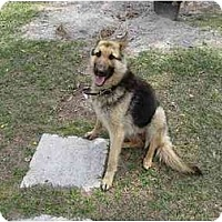 Adopt A Pet :: Odin - Green Cove Springs, FL