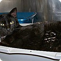 Adopt A Pet :: Win - Dover, OH