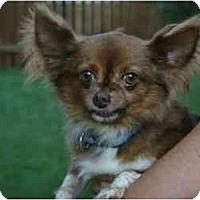 Adopt A Pet :: Cameron - Chesapeake, VA