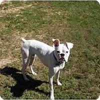 Adopt A Pet :: Porter - Thomasville, GA