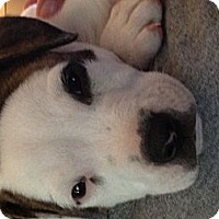 Adopt A Pet :: Daisy - Burton, OH