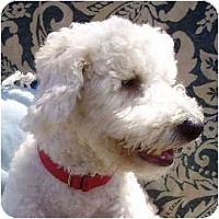 Adopt A Pet :: Shiloh - La Costa, CA