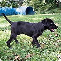 Adopt A Pet :: Sadie - Cumming, GA