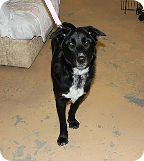 Retriever (Unknown Type) Mix Puppy for adoption in New Richmond,, Wisconsin - Gucci