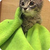 Adopt A Pet :: Heather - Scottsdale, AZ