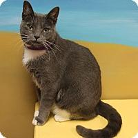 Adopt A Pet :: Arasely - Byron Center, MI