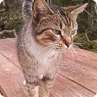 Adopt A Pet :: Caitlin - Fischer, TX