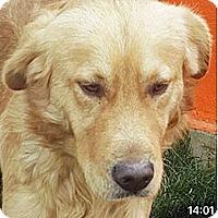 Adopt A Pet :: T4 Cupid - BIRMINGHAM, AL