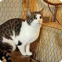 Adopt A Pet :: Jill and Jack - Montclair, NJ