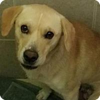Adopt A Pet :: Bailey - Philadelphia, PA