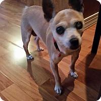 Adopt A Pet :: Wendy: loves dog treats! (PA) - Spring City, TN