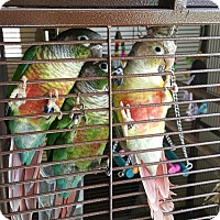 Adopt A Pet :: SUNNY, ITTY BITTY AND RAY - Oceanside, CA