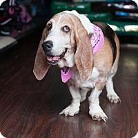 Adopt A Pet :: Delilah Chloe - Carrollton, TX