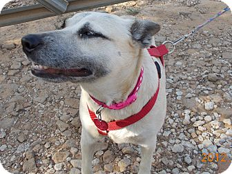 German Shepherd Dog Mix Dog for adoption in Weatherford, Texas - BELLA