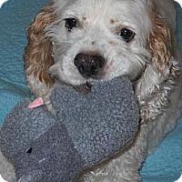Adopt A Pet :: Sammy - Albion, RI