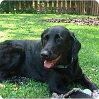 Adopt A Pet :: Maggie - Altmonte Springs, FL