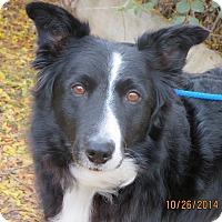 Adopt A Pet :: NESSA - Nampa, ID