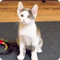 Adopt A Pet :: Possum - Chicago, IL