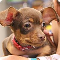 Adopt A Pet :: Hershey - Helotes, TX