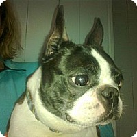 Adopt A Pet :: Booker - Cumberland, MD