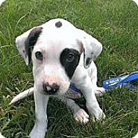 Adopt A Pet :: Cooper - WARREN, OH