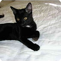 Adopt A Pet :: Ollivander - Scottsdale, AZ