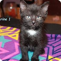 Adopt A Pet :: Katherine 1 - Plainville, MA