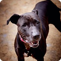 Adopt A Pet :: Sizzling Sophie - Issaquah, WA
