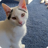 Adopt A Pet :: RICHARD aka Koji - Hamilton, NJ